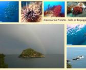 Area Marina Protetta Isola di Bergeggi – CINEmare