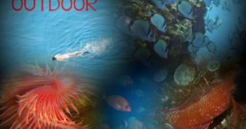 snork2
